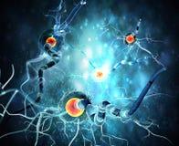 神经细胞 库存例证