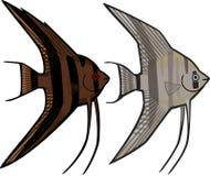 神仙鱼 向量例证