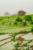 禁令Papongpieng米大阳台,清迈泰国 免版税库存图片