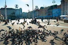 禁令Jelacic广场,萨格勒布 库存图片