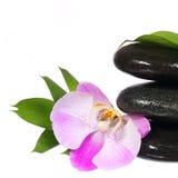 禅宗小卵石。温泉石头和桃红色兰花花与绿色叶子 免版税图库摄影