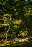 禅宗庭院和池塘 免版税库存照片