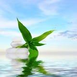 禅宗按摩石头和竹子在水中反射了 免版税库存照片