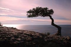 禅宗是在峭壁岩石和日落的一棵树在海 免版税库存图片