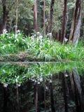 禅宗森林 免版税库存照片