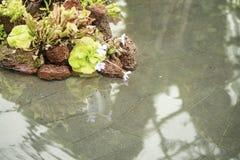 禅宗水放松反映 免版税库存图片