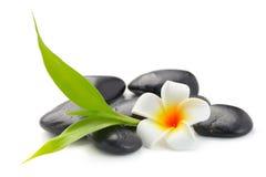 禅宗玄武岩石头、赤素馨花和竹子 库存照片