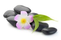 禅宗玄武岩石头、赤素馨花和竹子 图库摄影