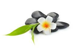 禅宗玄武岩石头、赤素馨花和竹子 库存图片