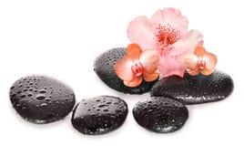 禅宗玄武岩石头和兰花在白色背景 库存照片