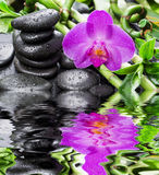 禅宗石头、兰花花和竹子在水中反射了 库存图片