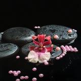 禅宗石头温泉静物画与下落的,兰花cambria花 库存图片