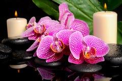 禅宗石头的温泉概念与下落的,开花的枝杈 库存图片