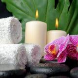 禅宗石头的美好的温泉概念与下落的,开花的枝杈  免版税库存图片