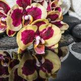 禅宗石头的美好的温泉概念,开花的枝杈兰花 免版税库存图片