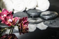 禅宗石头美好的温泉设置与下落和开花的枝杈的 免版税库存图片