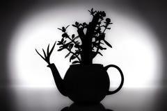 禅宗风水-在茶壶的盆景 库存照片