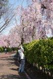 福岛,日本- 4月16,2016 :啜泣照相机的人拍照片 库存图片