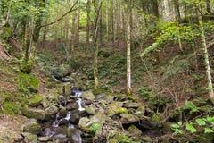福莱斯特Casentinesi国家公园的一点河库存照片