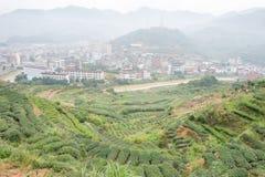 福建,中国- 2015年12月24日:茶园在西平镇 fa 免版税库存图片