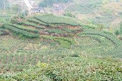 福建,中国- 2015年12月24日:茶园在西平镇 fa 库存图片