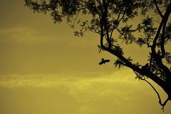 离开从树的Silhoutee观点的鸟 图库摄影