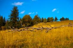 离开的干草甸山老树干 免版税图库摄影