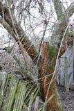 离开的庭院 在树发芽的美丽的绿色青苔 图库摄影