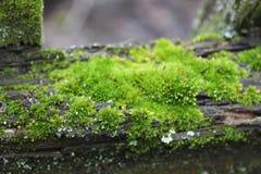 离开的庭院 用绿色青苔盖的树 纹理 自然 一棵异常的树 青苔损坏树的吠声 李 免版税库存图片