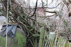 离开的庭院 长得太大的葡萄 在青苔的藤 库存照片