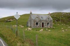 离开的村庄和许多绵羊 库存图片