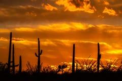 离开绿洲在与云彩和桔黄色天空的日落 库存图片