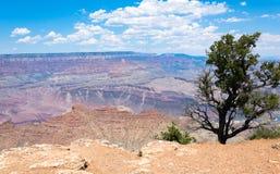 离开美国的西南的风景 大峡谷和沙漠植物 免版税库存图片