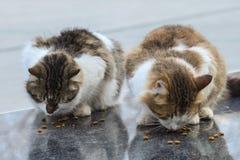 2019离群猫摄影师新的照片,在街道的逗人喜爱的街道猫 库存照片
