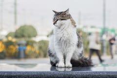 2019离群猫摄影师新的照片,在街道的逗人喜爱的街道猫 免版税库存图片