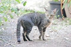 离群猫 免版税库存照片