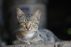离群猫 图库摄影