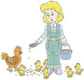 禽畜妇女哺养的鸡 免版税库存图片