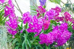 秀丽五颜六色的兰花 免版税图库摄影