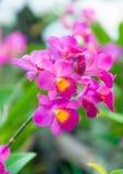 秀丽五颜六色的兰花 免版税库存照片