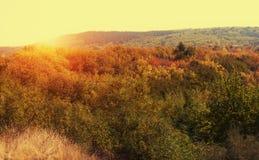 秀丽五颜六色的森林每秋天天 库存图片