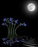 秀丽会开蓝色钟形花的草月亮 免版税库存照片