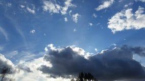 秀丽冷森林天空雪结构树 库存图片