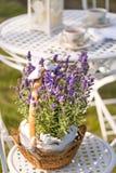 秀丽和新鲜的淡紫色在花盆 免版税库存照片
