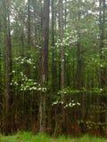 秀丽在森林里 免版税图库摄影