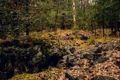 秀丽在神秘的森林的早晨的雾 免版税库存图片