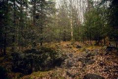 秀丽在神秘的森林的早晨的雾 库存图片