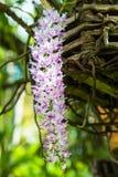 秀丽开花小的紫罗兰色兰花 库存照片