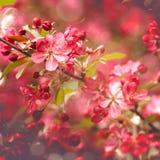 秀丽抽象花卉背景 免版税库存图片