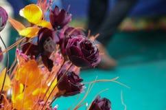 秀丽接近的花自然桃红色玫瑰色 免版税库存照片
